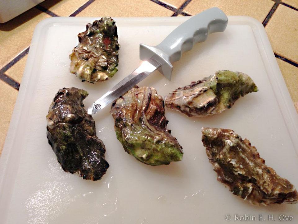 raw miyagi oysters
