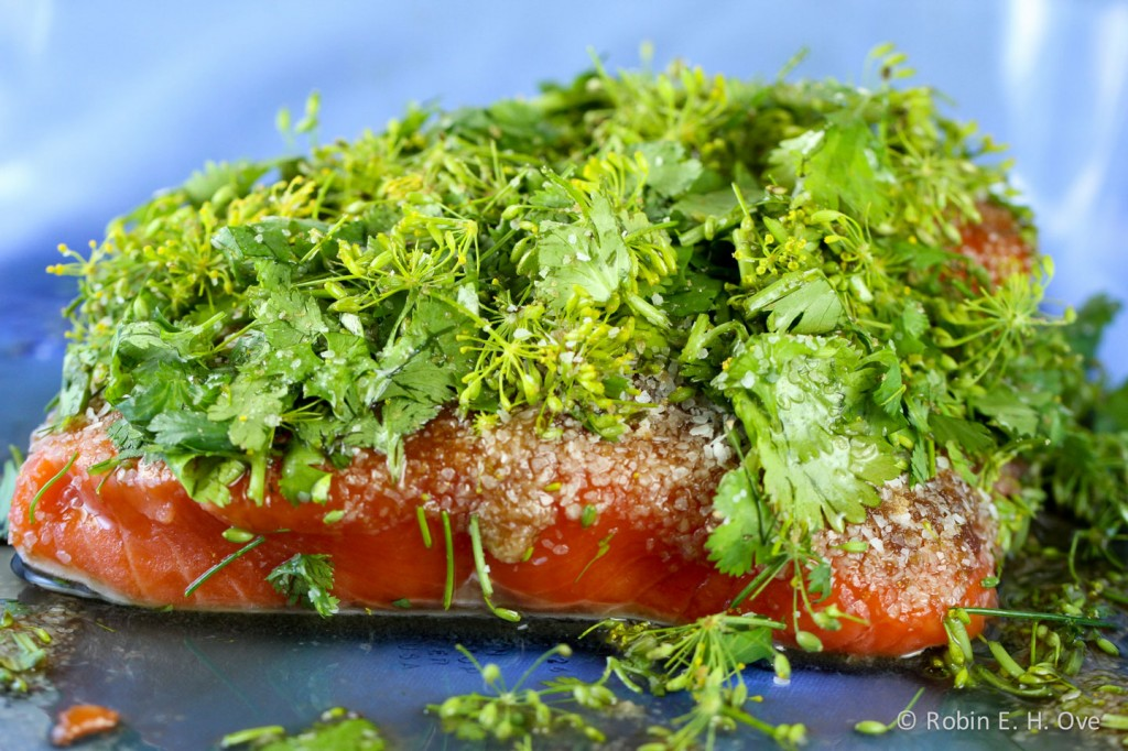 Salmon, fresh herbs